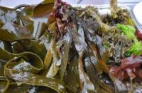 islys, apero algues 2017